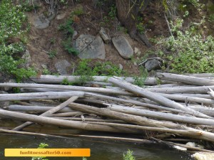 Can you see the marmot on the logs?
